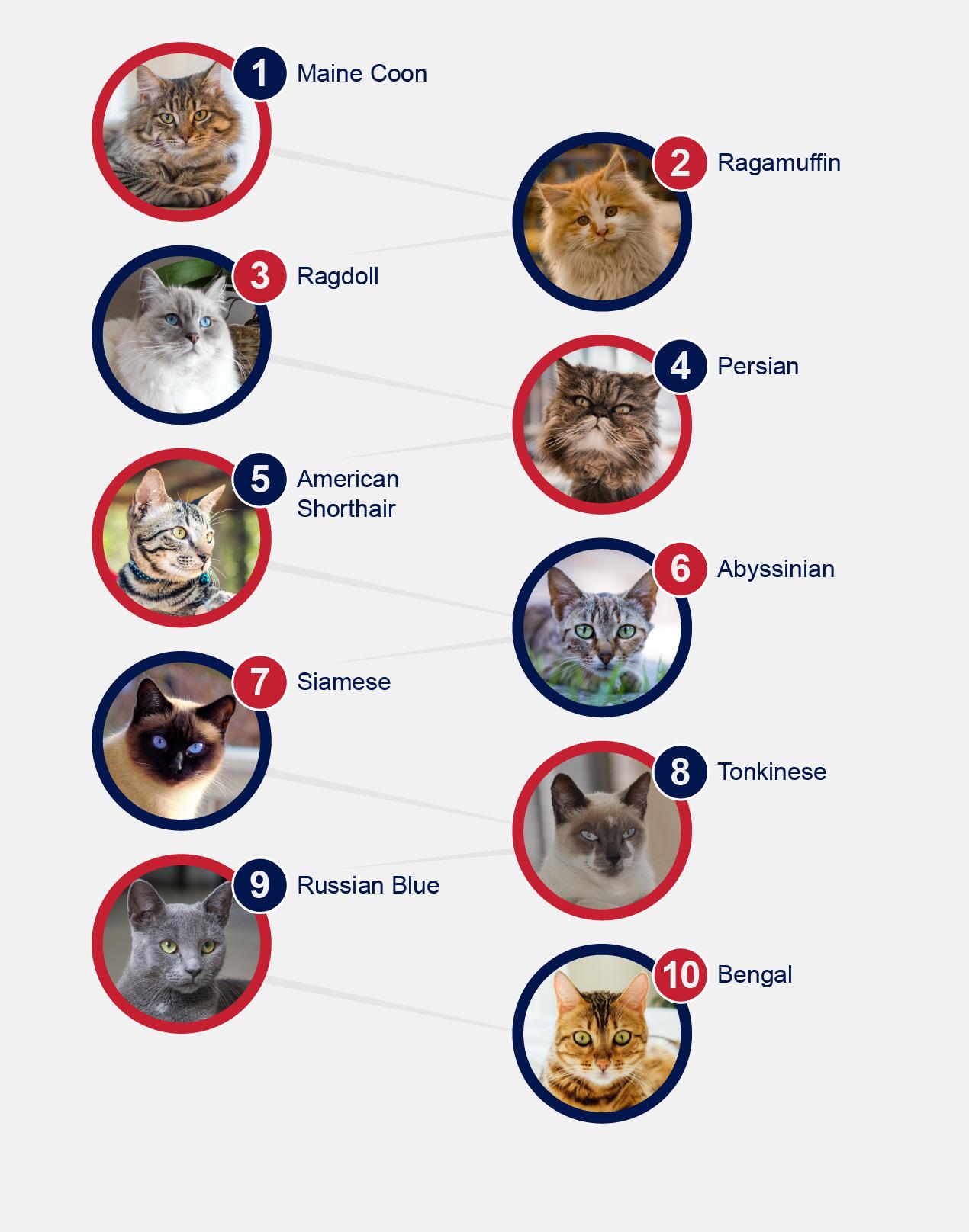 10 Popular Cat Breeds
