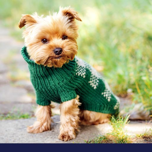 Should Dogs Have And Wear Clothes? PetlifeSA