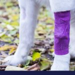 First aid for dogs part 2