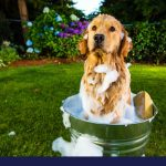 Handy overview of dog shampoos