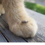 Ticks a growing threat