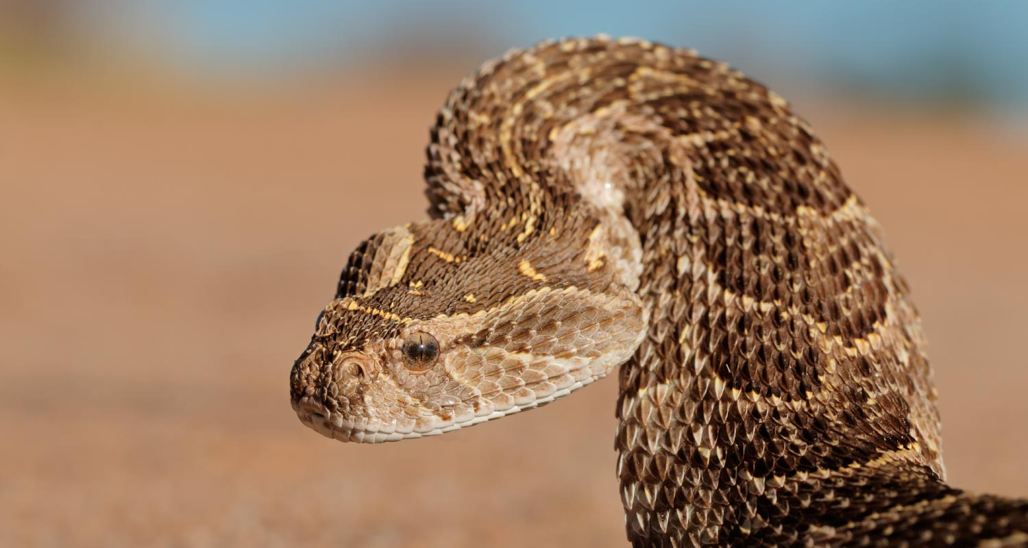 Pets owners guide for snake season