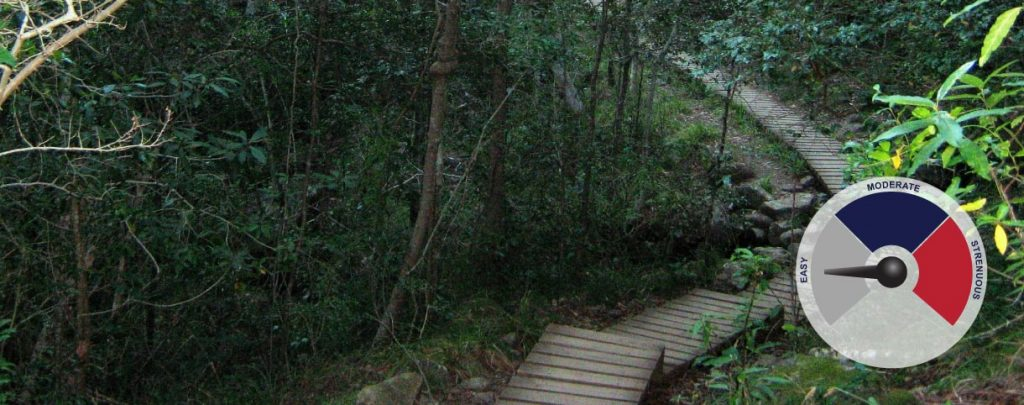 Hikes, walks and parks in cape town - newlands forest