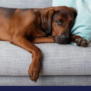 what you need to know about epilepsy in dogs