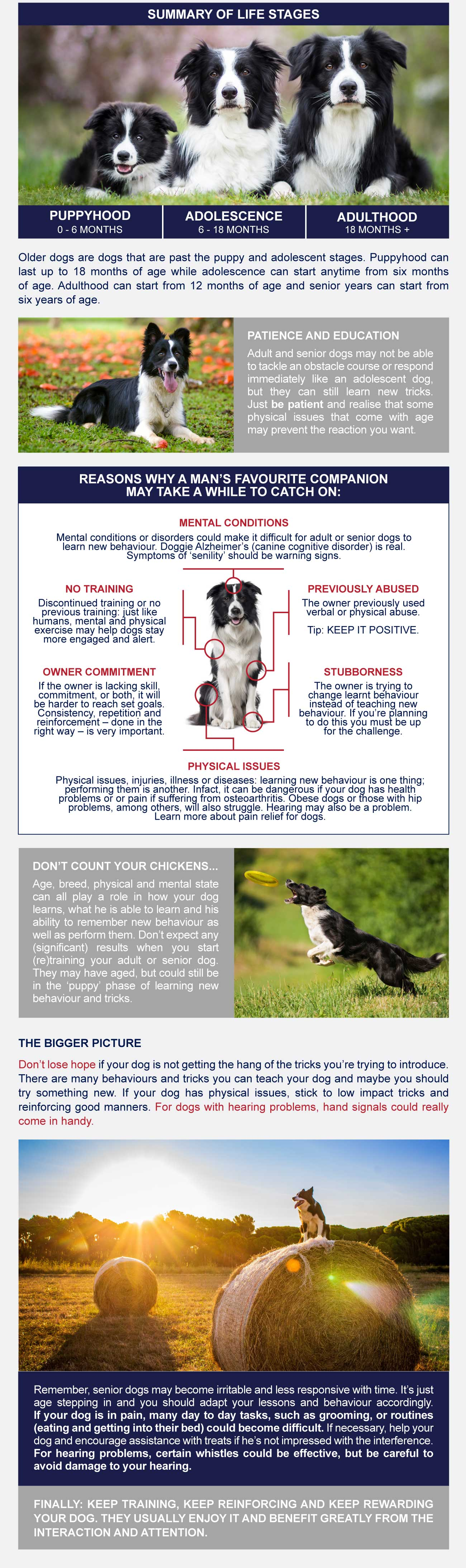 Infographic-how to train older dogs