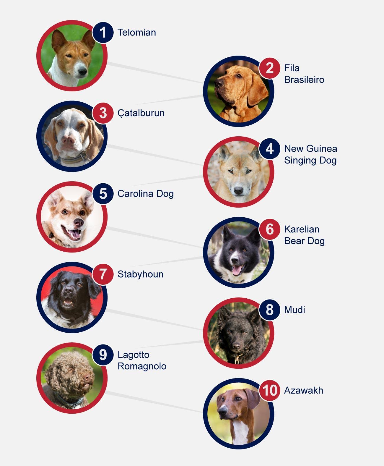 Top 10 rare breeds