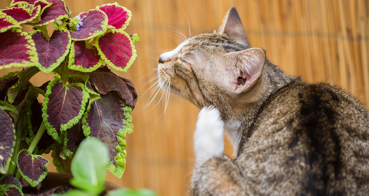 most common parasites in cats