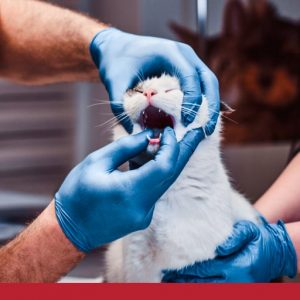 Types of oral gum and tooth disease in cats
