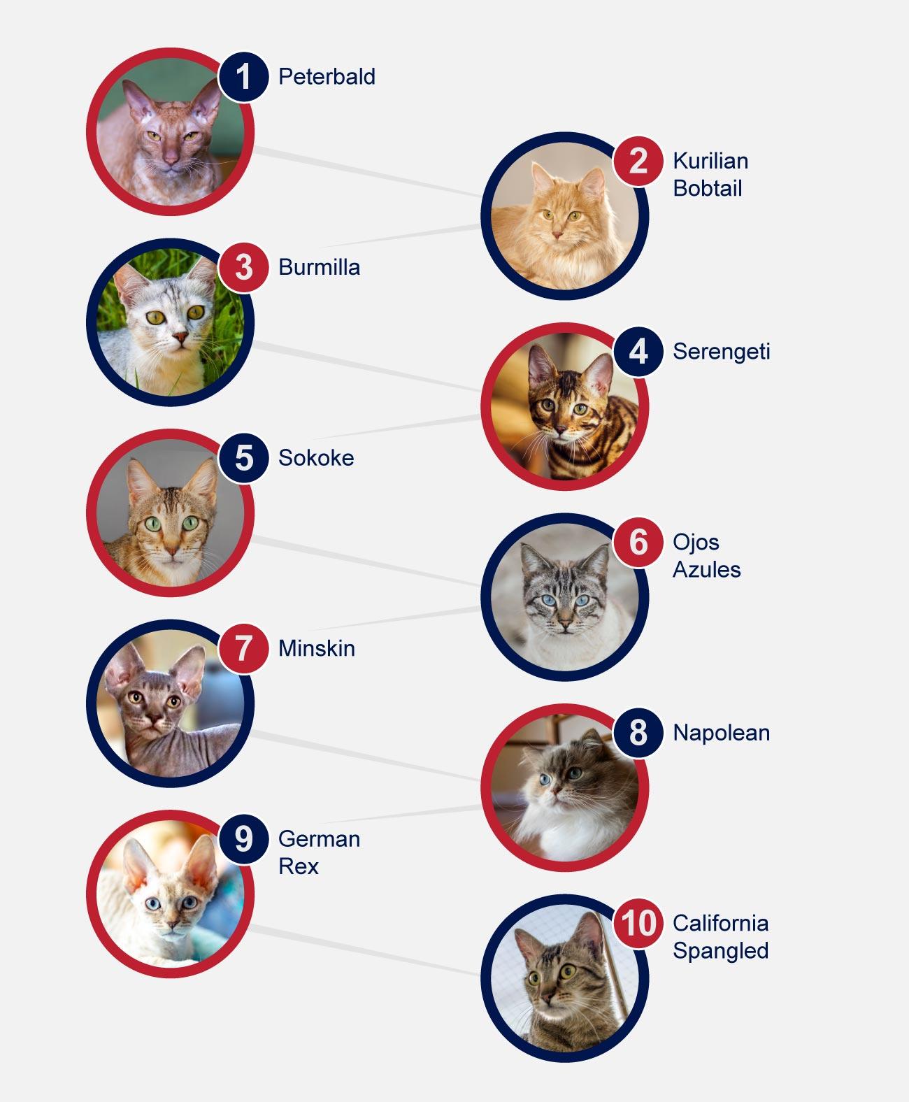 Rare breeds of cats