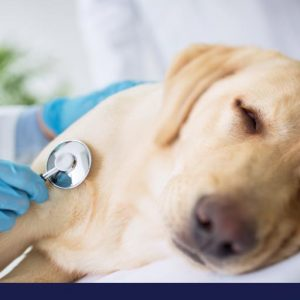 What you need to know about heart attacks in dogs
