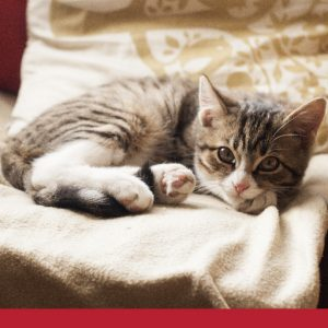 at home management for cats with ckd