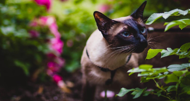origins of cats