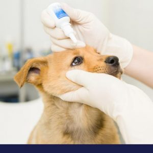 eye conditions in dogs part 2