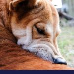 What causes your dogs skin problems