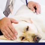 Causes and signs of yeast infection in dogs