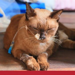 Overview of cancer in cats