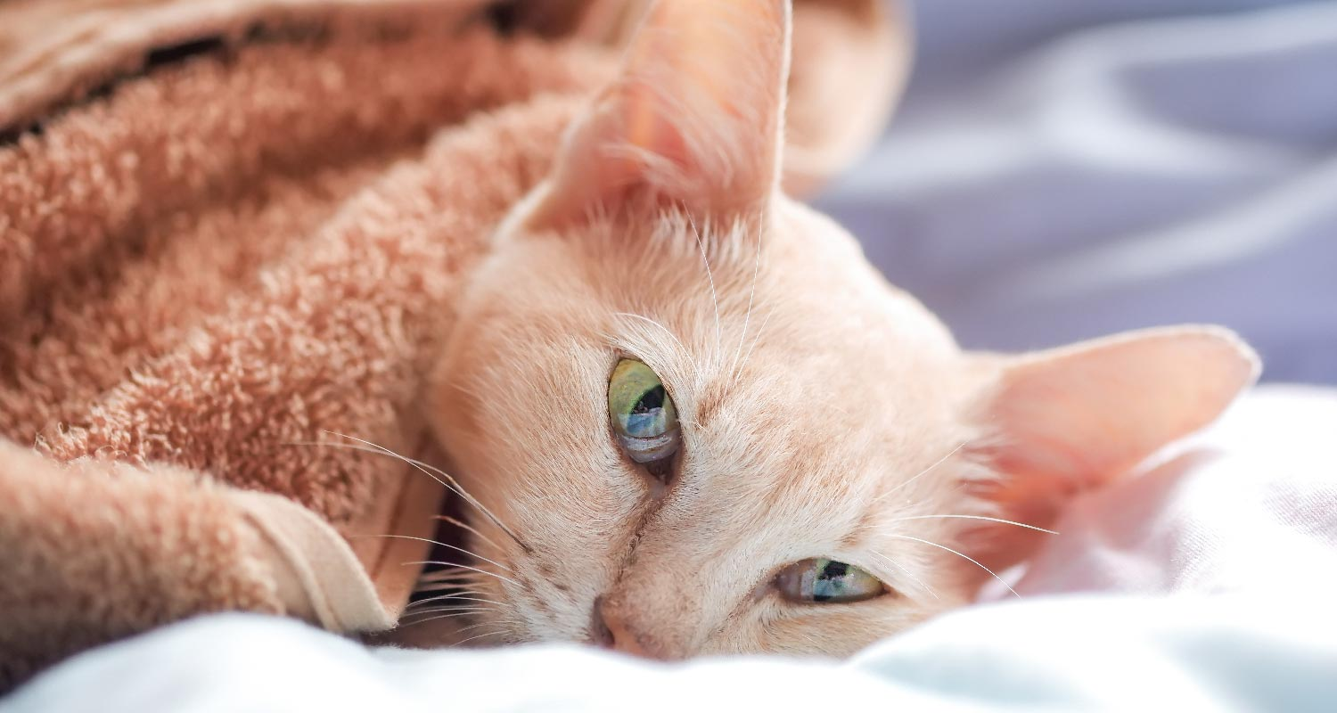 Types of rare cancers in cats
