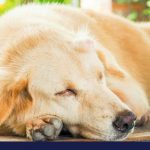 Overview of cancer causes and signs in dogs