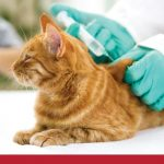 Diabetes in cats symptoms to watch out for